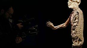 O corpo humano tem mais um órgão do que se pensava  Leia mais: O corpo humano tem mais um órgão do que se pensava