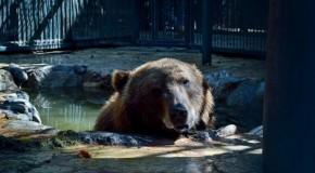 Deputado tinha jardim zoológico privado
