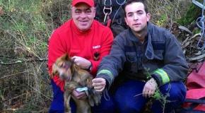 Cão salvo pelos bombeiros
